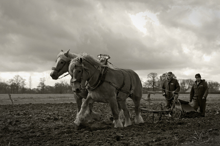 De Boerenstiel 2 - Klaartje, de jongste van de brabanders, nog redelijk onervaren in het ploegen mocht wat eerder naar de stal. Sofie en Roos vonden het helemaal niet e - foto door kosmopol op 11-04-2012 - deze foto bevat: paarden, boer, ploegen, span, kosmopol