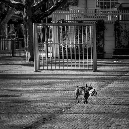 De winterstop is voorbij.. - Amstelveld - foto door Riccardo47 op 19-01-2016 - deze foto bevat: dieren, huisdier, hond, voetbal, doel, monochrome, zwart wit