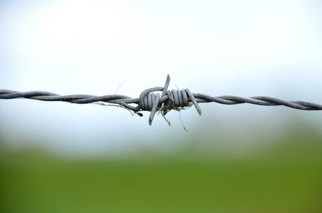 Vrijheid en gevangenschap