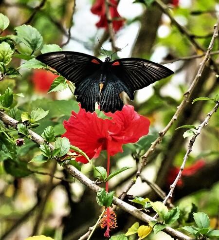 Mijn Reizen - En dat zittend op mijn terrasje kan genieten van de vlinders  is hier goed te zien .   Bedankt voor de reacties  Groeten    Eddy Stumpf - foto door Stumpf op 07-03-2021