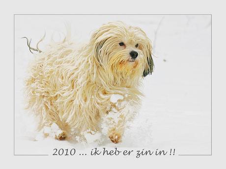 happy 2010 !
