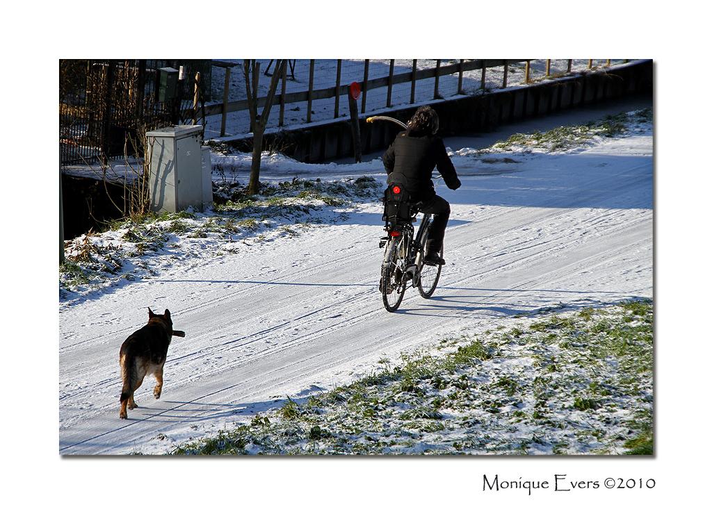 Wie laat wie nu uit ... - Deze foto gemaakt op 3 januari terwijl ik op de dijk liep kwamen dit baasje en zijn hond onderaan de dijk voorbij rijden. Ik vond wel een leuk gezich - foto door MoniqueEvers op 17-01-2010 - deze foto bevat: winter, hond, fietsen, dordrecht, baasje