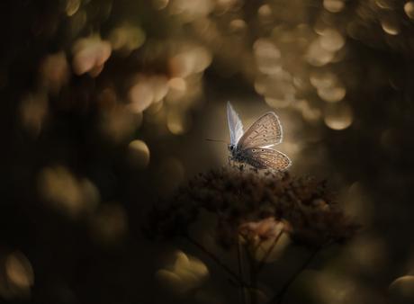 catch the Light