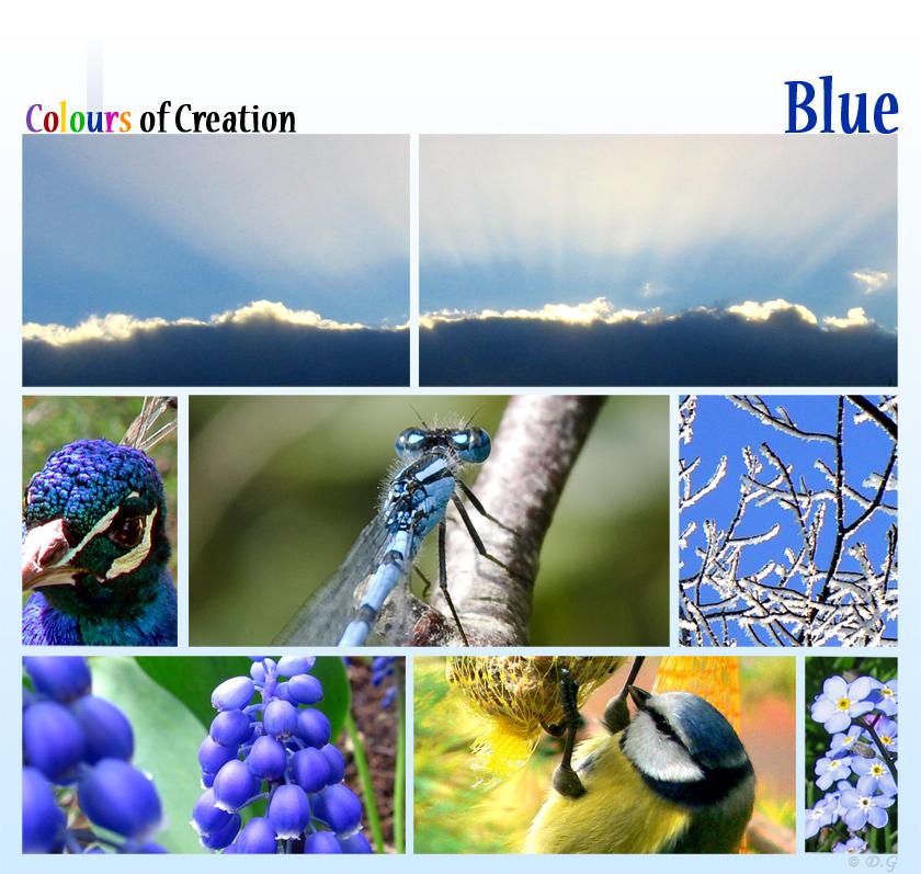 COC: Blue - Dit is de vijfde collage uit mijn 7-delige serie 'Colours of Creation'  Kleuren uit de natuur.  Hierna volgen nog 2 kleuren uit het woord 'Colour - foto door daniel44 op 29-10-2008 - deze foto bevat: blauw, natuur, blue, collage, colours, creation, serie, daniel44