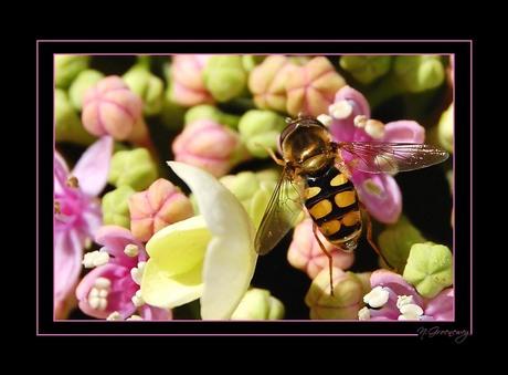 bloemen en bijtjes