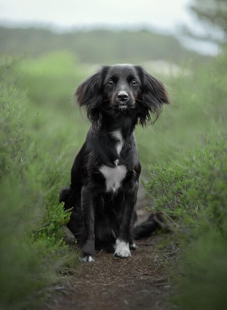 puppy mies