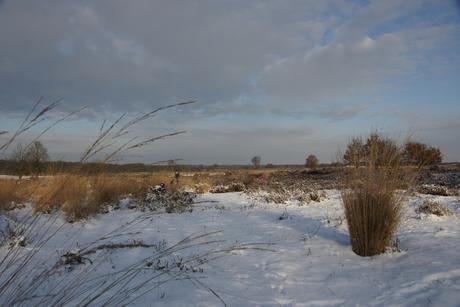 Heide bij Ermelo II
