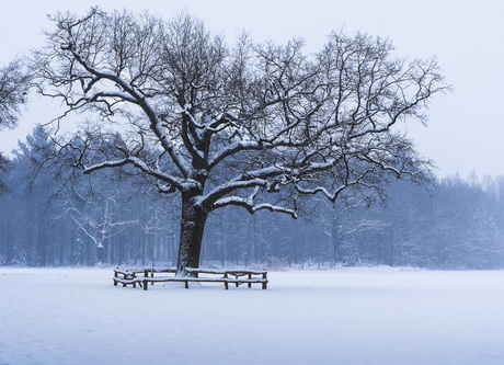 The cold lonely tree