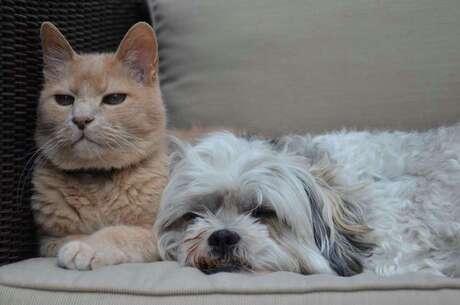 Spooky en Toby
