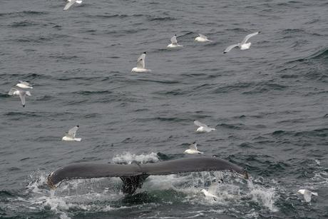Staart van een walvis