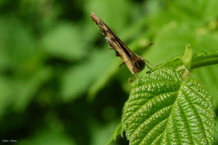 Hallo!! - Ze zijn er weer! Na uren geplaagd te worden door een koolwitje kwam ik dit wollige exemplaartje tussen de blaadjes tegen... omdat hij wel even de tij - foto door sam_sam op 18-04-2009 - deze foto bevat: vlinder