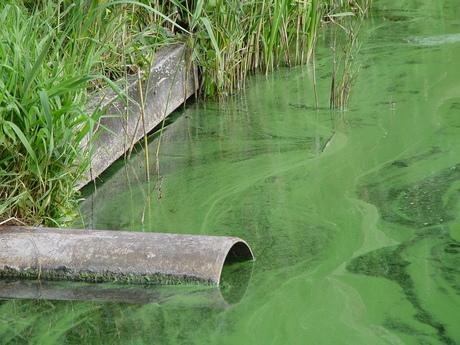 groen als......