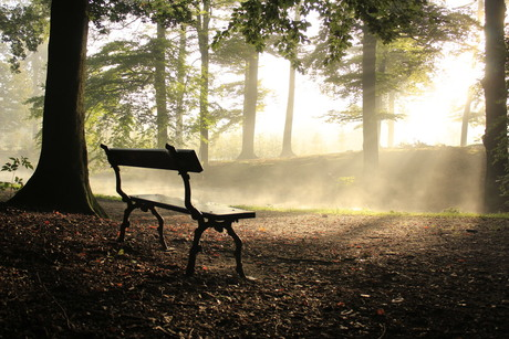 de ochtend zon