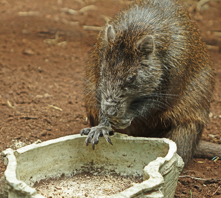 Leeg - Prettig weekend, gr. Nel - foto door Nel Hoetmer op 30-04-2016 - deze foto bevat: dieren, blijdorp, nel