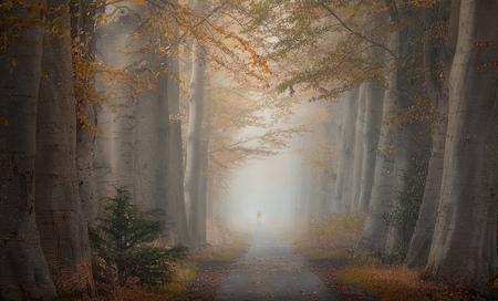 Misty lane 2 - - - foto door renevierhuis op 14-11-2020 - deze foto bevat: natuur, licht, herfst, landschap, mist, bomen, laan