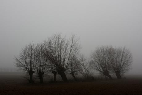 Mist in de Achterhoek