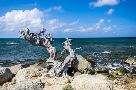 Grillig - Een dode boomstam geklemd tussen de rotsen aan de kust - foto door w.herlaar op 08-04-2021 - locatie: Aruba - deze foto bevat: zee, rotsen, boomstronk, water, wolk, lucht, fabriek, blauw, azuur, hout, natuurlijk landschap, boom, kust- en oceanische landvormen