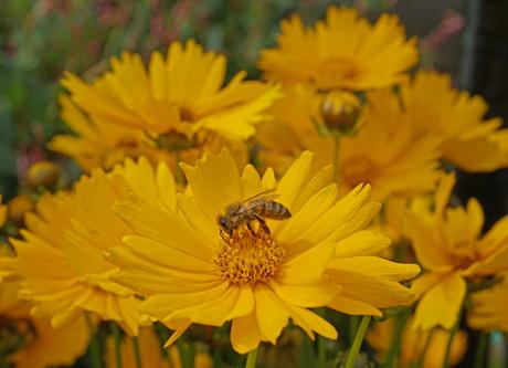 flowers and bijen