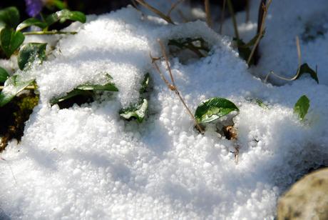 Hagel: smeltend mini landschap (voortuin, lekker close to home).