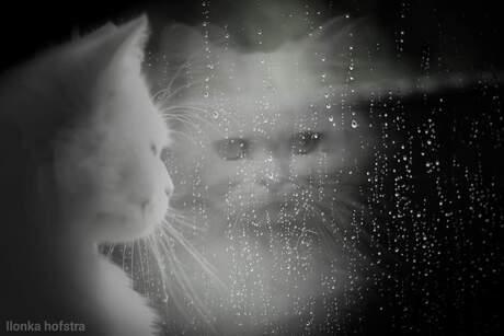 Raindrups