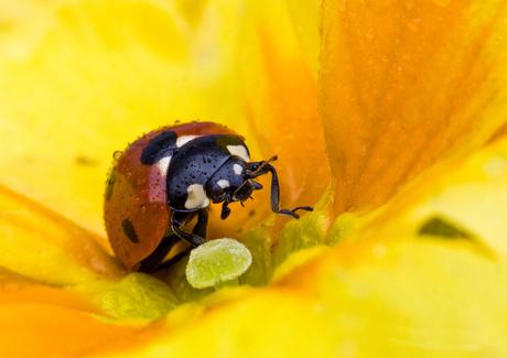Lente in de tuin