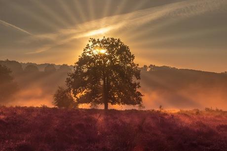 De Posbank tijdens zonsopgang