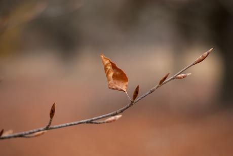Last leaf standing
