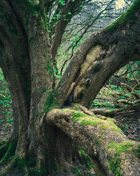 De boom - Een boom in het Vroege Vogel bos bij Almere-Haven - foto door reinder.tasma op 11-04-2021 - locatie: Almere Haven, Almere, Nederland - deze foto bevat: groen, plant gemeenschap, ecoregio, fabriek, natuurlijk landschap, hout, takje, terrestrische plant, kofferbak, boom