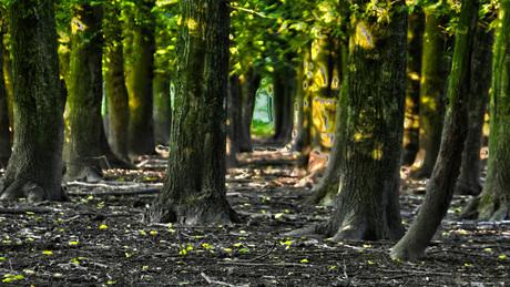 Bomen schapenweide Westerpark Zoetermeer