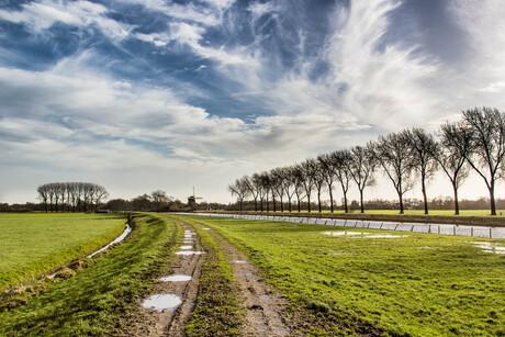 Hollandsche Schoonheid