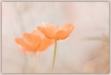 Rara bloemetje...