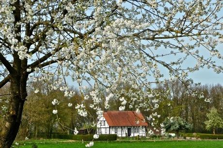 Lente in Zuid-Limburg