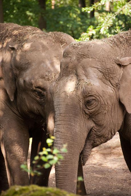 Elephants for life