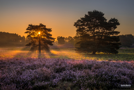 De Brunssummerheide bij zonsopkomst