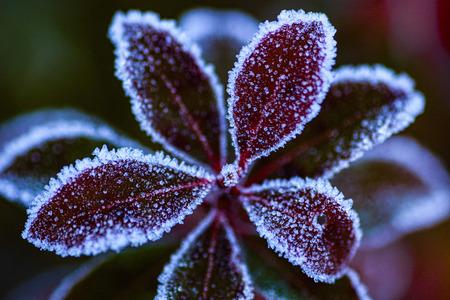 IMG_2207 - - - foto door maritabma op 26-02-2021 - deze foto bevat: macro, natuur, winter