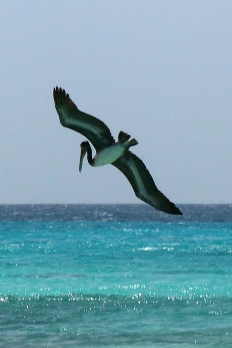vliegende visser