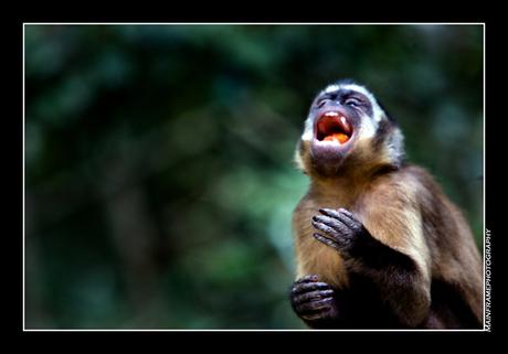 Streetlife monkey