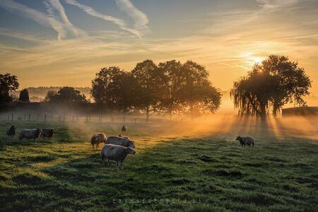 Zonsopkomst in de polder - Een fraaie zonsopkomst met wat mist, maakt zelfs een plek waarje het niet verwacht prachtig. - foto door raym op 24-10-2018 - deze foto bevat: zon, landschap, mist, zonsopkomst, schapen, zonnestralen, grondmist