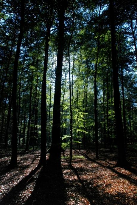 Diep in het woud