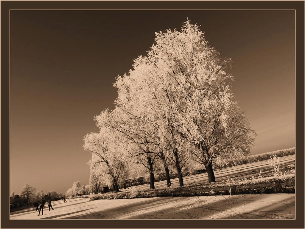 Nog maar eentje dan-2 ... - Ik heb er nog een paar in petto; Foto's van de witte bomen én molens in Kinderdijk. Deze heb ik ook weer omgezet in sepia.  Het kan gerust weer 10 - foto door Foto_Marleen op 17-01-2009 - deze foto bevat: lucht, rijp, winter, ijs, molens, sepia