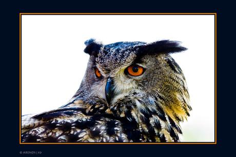 Wise old bird. jpg