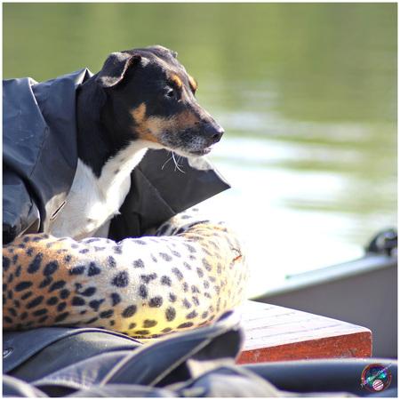 De scheepshond ... - - - foto door willemdanker op 17-11-2018 - deze foto bevat: hond, wolderwijd, zeewolde, scheepshond
