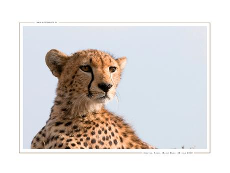 Cheetah II, Kenia