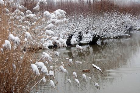 Winter in Rhoonse Grienden