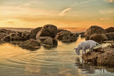 An Evening Dip