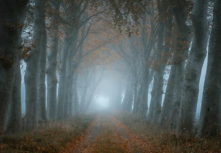 Misty lane 1 - - - foto door renevierhuis op 13-11-2020 - deze foto bevat: natuur, herfst, zonsondergang, landschap, mist, bomen, laantjes