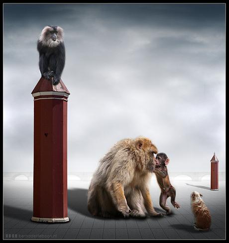 It's a monkey world