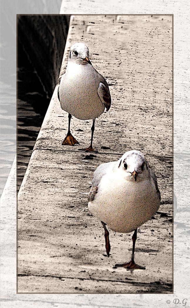 Marching On - De titel spreekt voorzich.  Sepia gekleurd met uitzondering van de meeuwen. En op de gehele foto een filter toegepast. - foto door daniel44 op 04-02-2008 - deze foto bevat: water, meeuw, vogel, on, sepia, lopen, filter, daniel44, marching