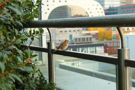 Little bird in Rotterdam