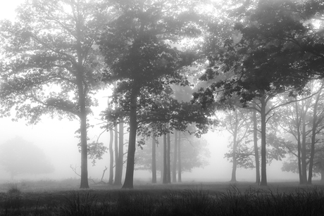 Mist (erious) BW